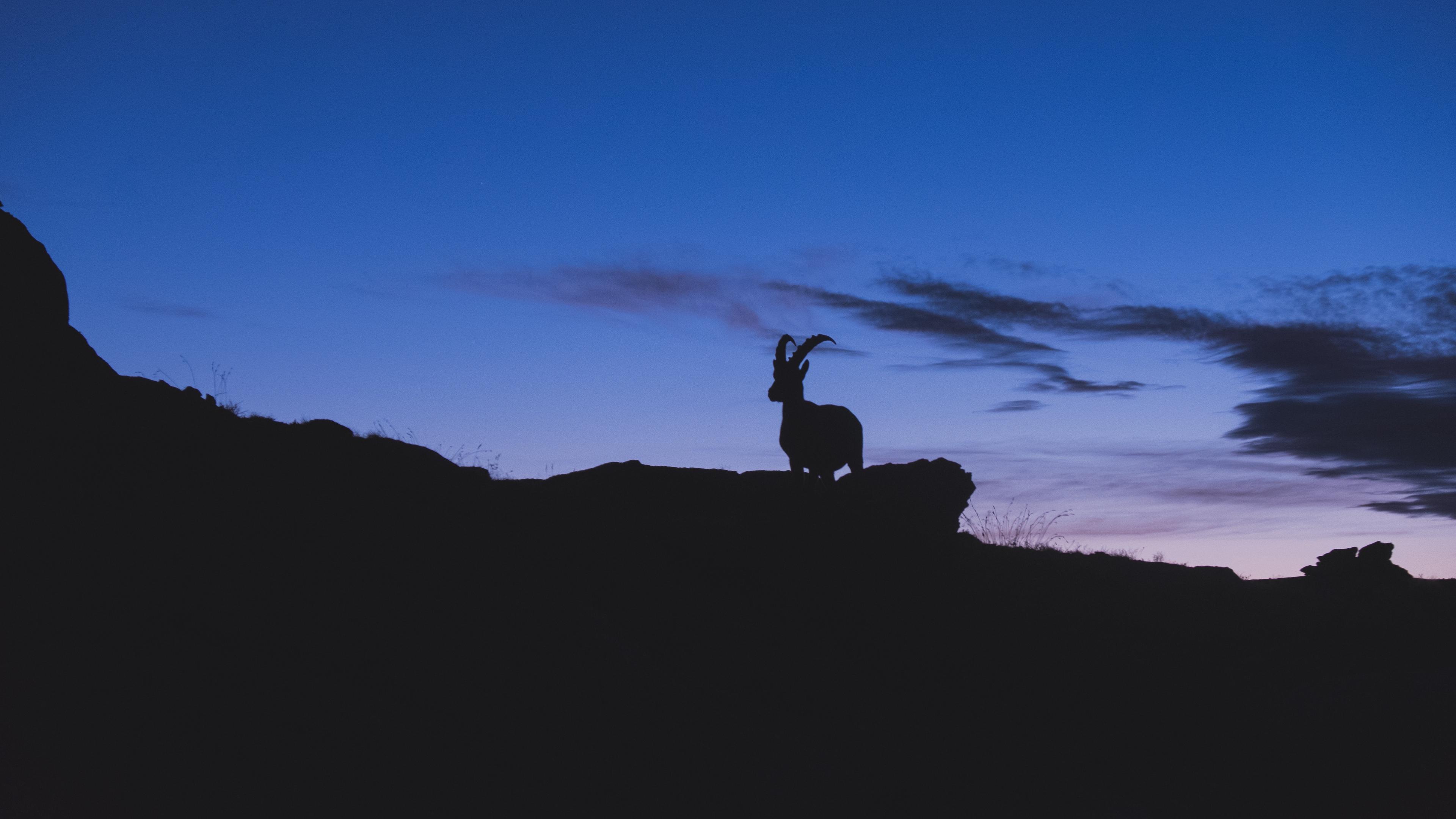 mountain goat silhouette night 4k 1540575120 - mountain goat, silhouette, night 4k - Silhouette, Night, mountain goat