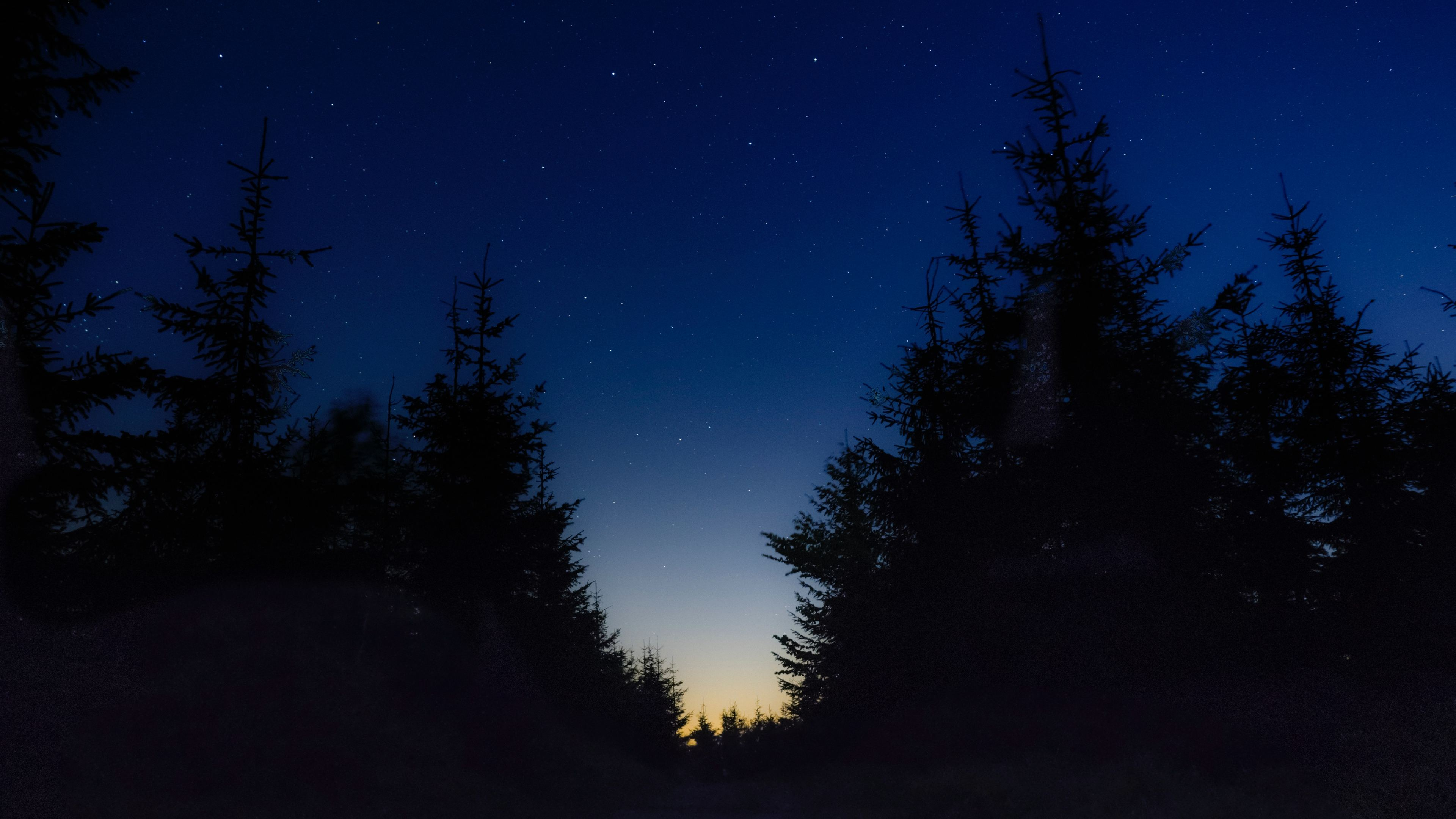 Wallpaper 4k Nice View Between Forest Trees At Evening Sky