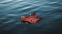 orange autumn leaf floating on water 4k 1540140122 200x110 - Orange Autumn Leaf Floating On Water 4k - water wallpapers, photography wallpapers, nature wallpapers, leaf wallpapers, hd-wallpapers, autumn wallpapers, 5k wallpapers, 4k-wallpapers