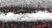 orange tress autumn forest landscape mist scenic nature 4k 1540135366 200x110 - Orange Tress Autumn Forest Landscape Mist Scenic Nature 4k - trees wallpapers, nature wallpapers, mist wallpapers, landscape wallpapers, hd-wallpapers, forest wallpapers, fog wallpapers, autumn wallpapers, 5k wallpapers, 4k-wallpapers