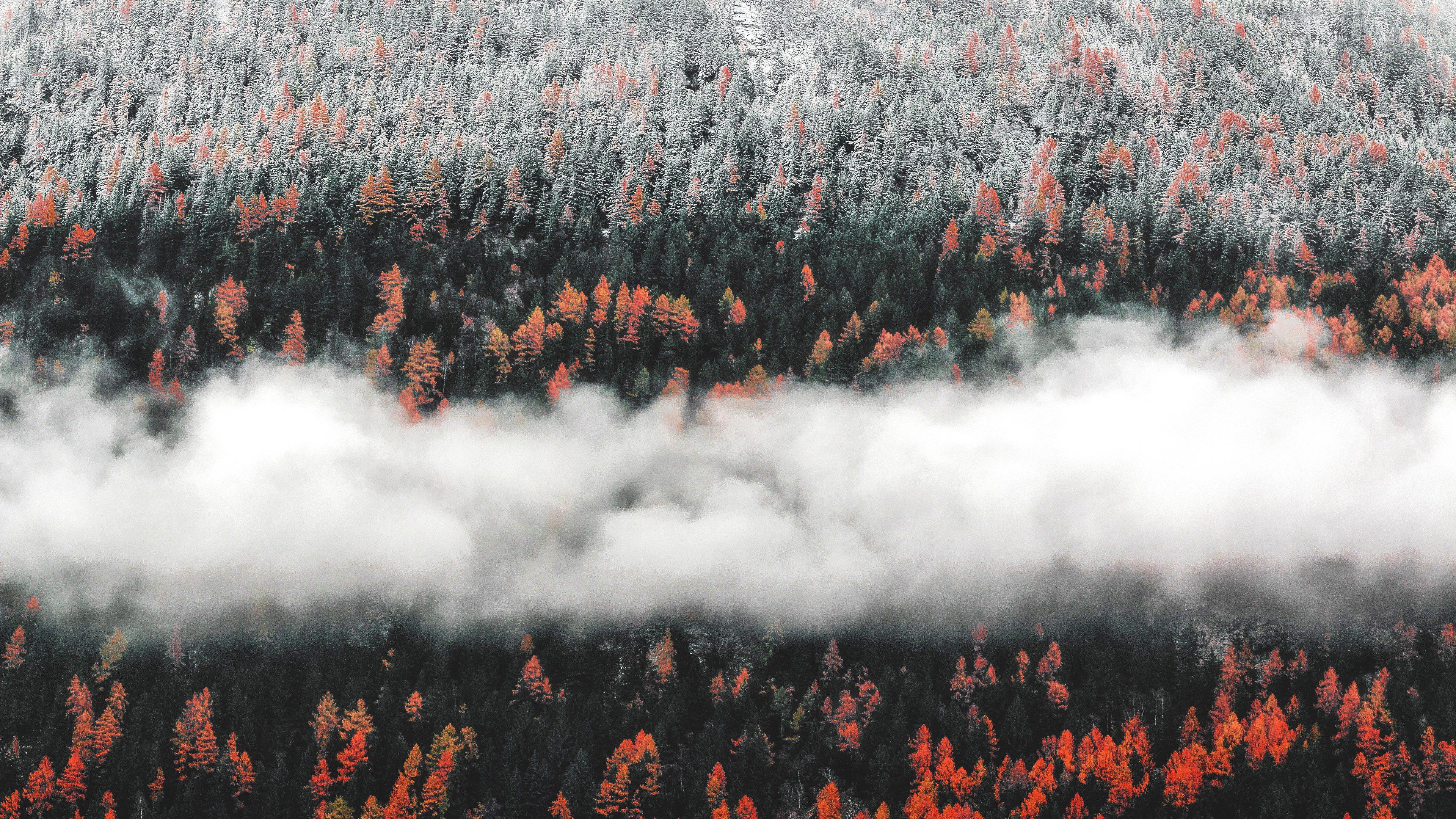 orange tress autumn forest landscape mist scenic nature 4k 1540135366 - Orange Tress Autumn Forest Landscape Mist Scenic Nature 4k - trees wallpapers, nature wallpapers, mist wallpapers, landscape wallpapers, hd-wallpapers, forest wallpapers, fog wallpapers, autumn wallpapers, 5k wallpapers, 4k-wallpapers