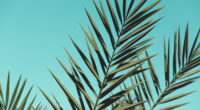 palm leaves sunlight day green leaves 4k 1540133974 200x110 - Palm Leaves Sunlight Day Green Leaves 4k - trees wallpapers, sunlight wallpapers, nature wallpapers, leaves wallpapers, hd-wallpapers, 4k-wallpapers