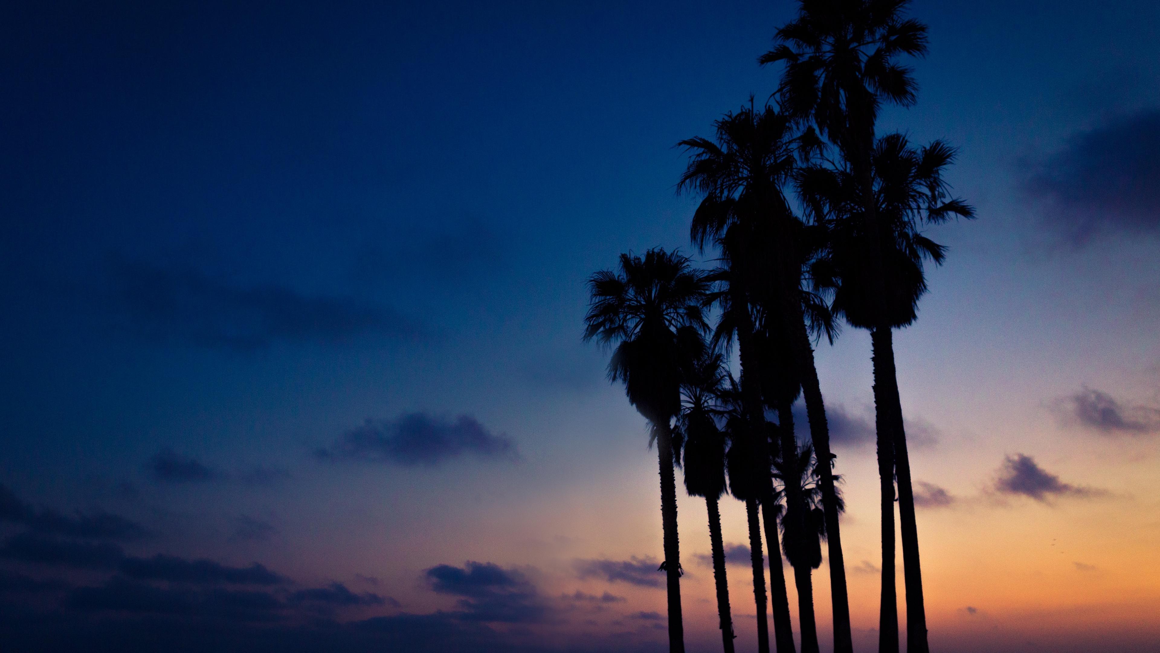 palms night sky 4k 1540576059 - palms, night, sky 4k - Sky, palms, Night