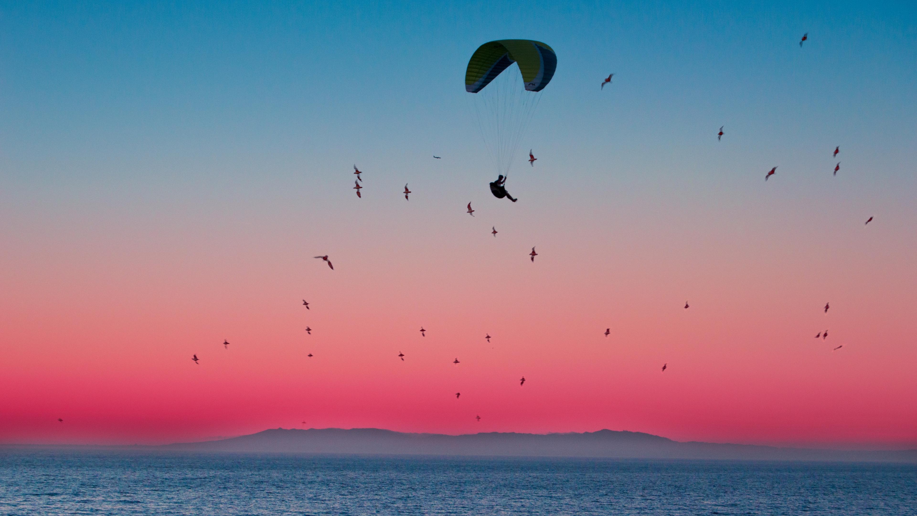 paragliding parachute sea flight birds horizon 4k 1540063429 - paragliding, parachute, sea, flight, birds, horizon 4k - Sea, paragliding, parachute