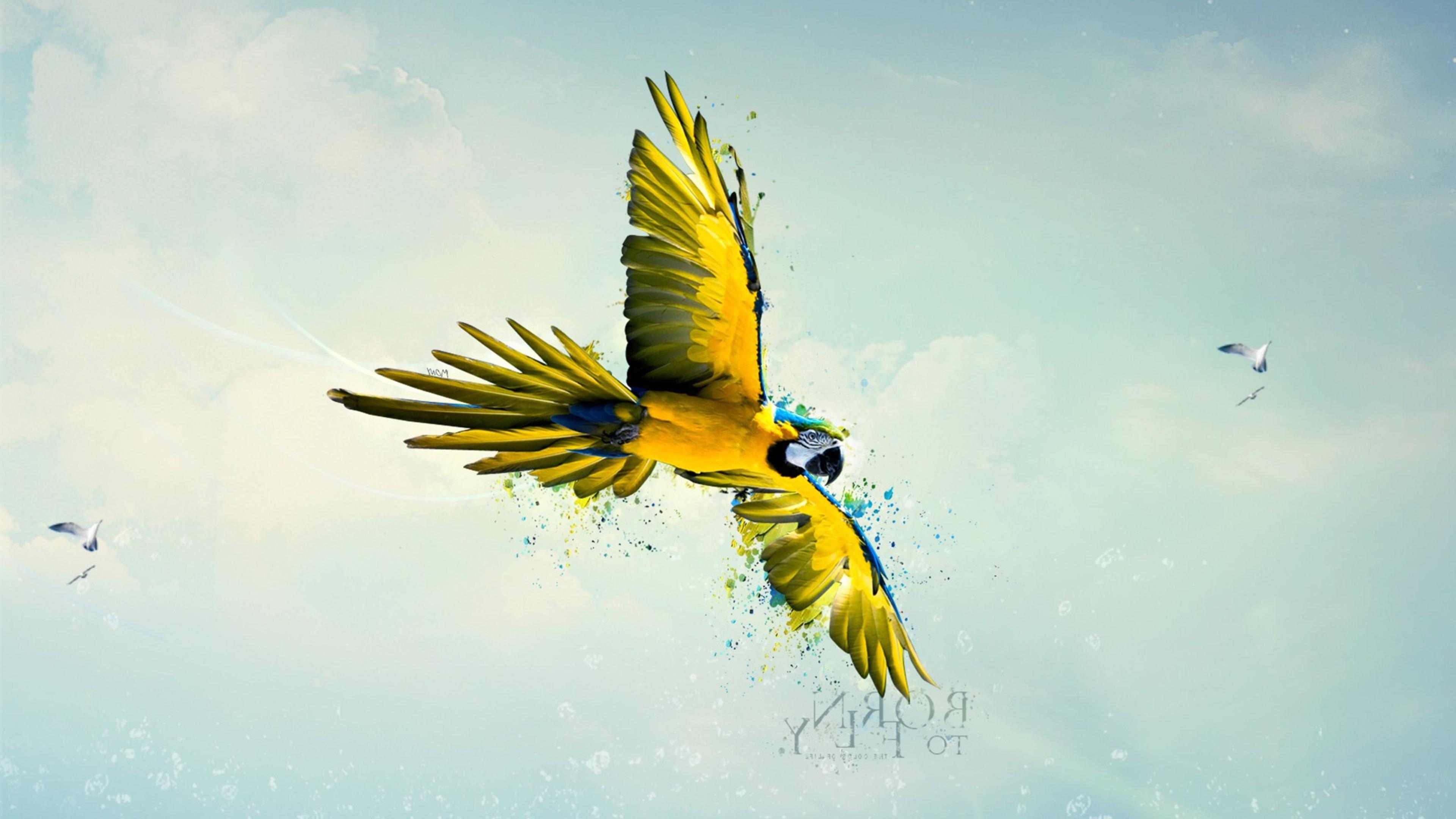 parrot art 4k 1540748503 - Parrot Art 4k - parrot wallpapers, flying wallpapers, digital art wallpapers, artist wallpapers