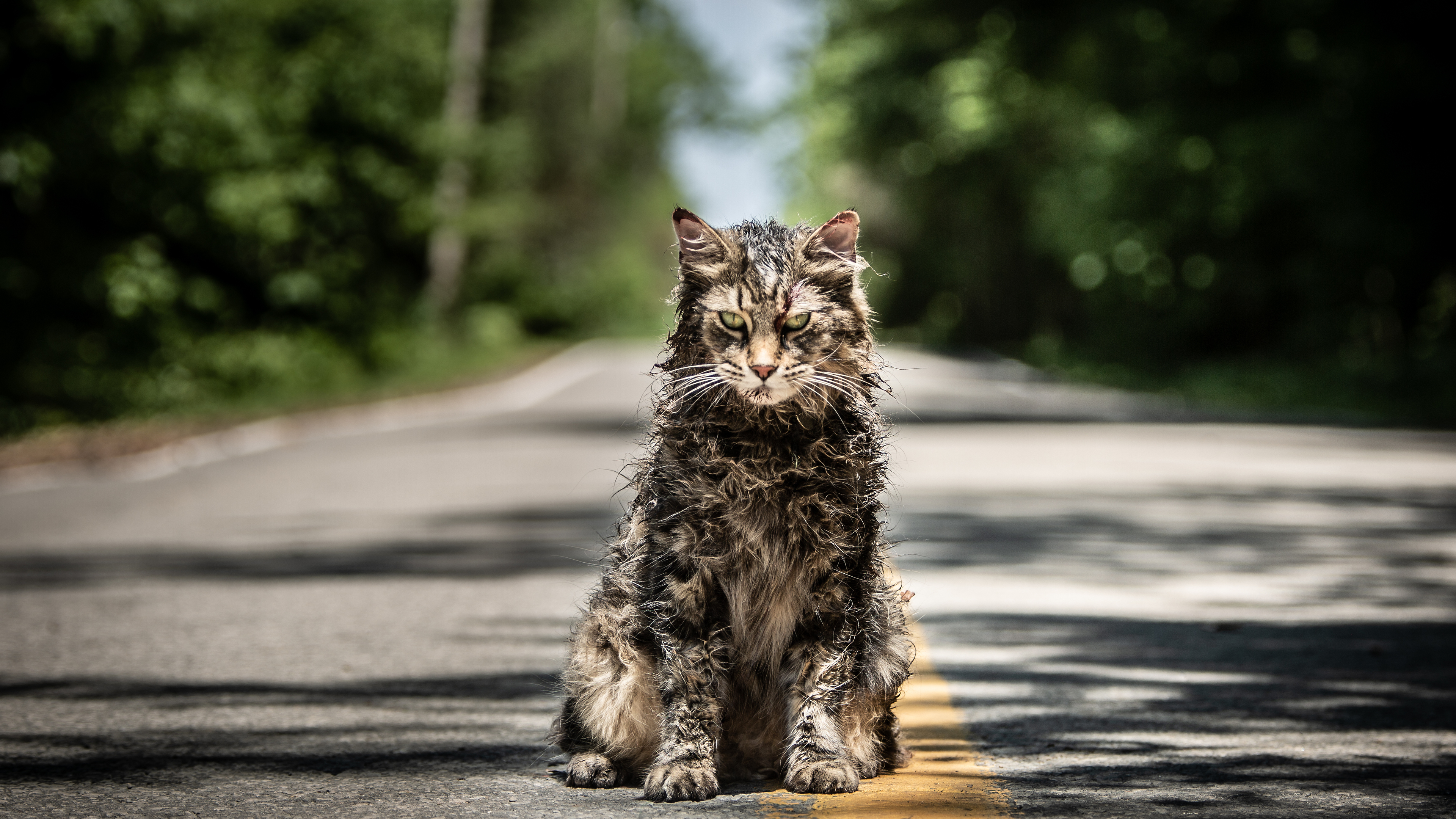 Wallpaper 4k Pet Sematary Movie 2019 2019 Movies Wallpapers 4k Wallpapers 5k Wallpapers Hd Wallpapers Movies Wallpapers Pet Sematary Wallpapers