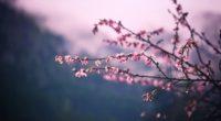pink blossom tree branch spring 5k 1540143196 200x110 - Pink Blossom Tree Branch Spring 5k - tree wallpapers, spring wallpapers, pink wallpapers, leaves wallpapers, hd-wallpapers, 5k wallpapers, 4k-wallpapers
