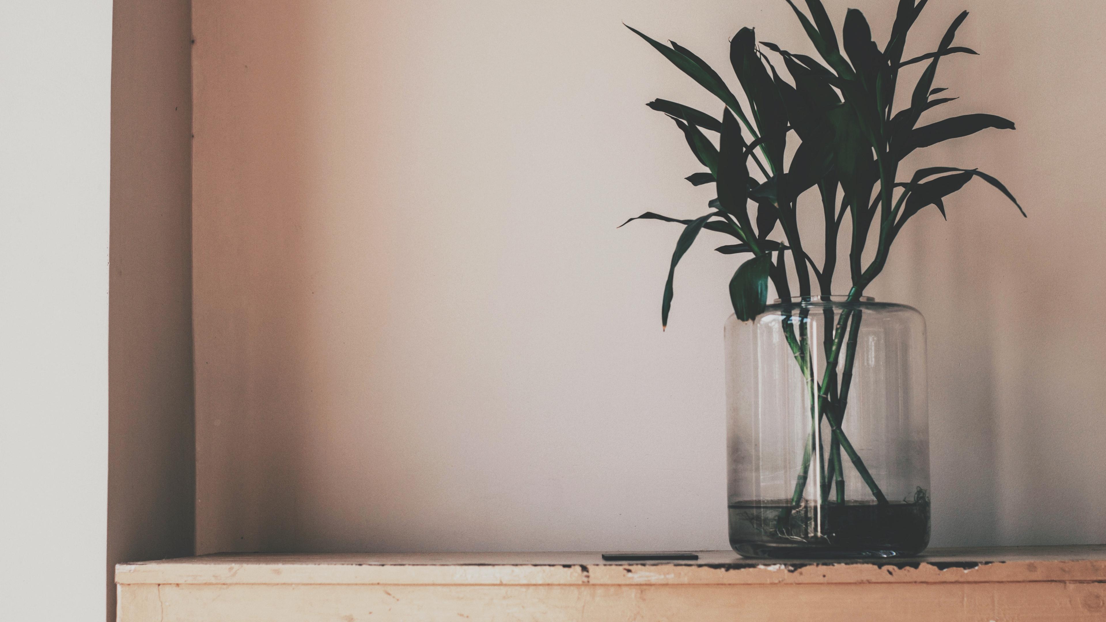 plant vase leaves 4k 1540064194 - plant, vase, leaves 4k - Vase, Plant, Leaves