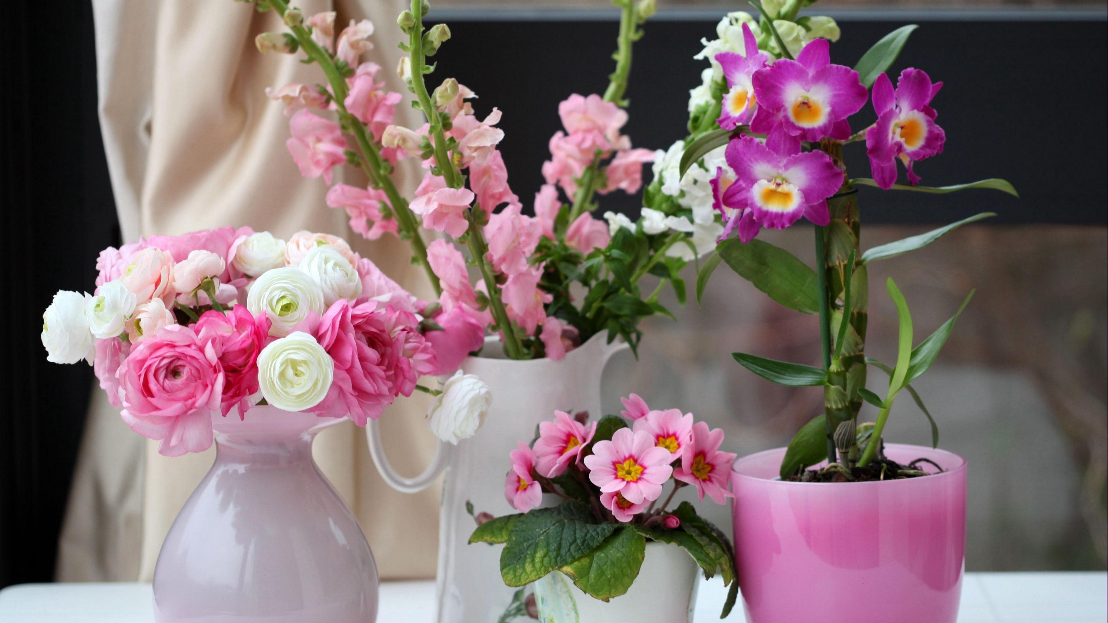 primrose ranunkulyus orchid gillyflower flowers beauty 4k 1540064747 - primrose, ranunkulyus, orchid, gillyflower, flowers, beauty 4k - ranunkulyus, primrose, Orchid