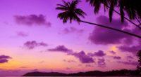 purple palm tree 4k 1540131528 200x110 - Purple Palm Tree 4k - trees wallpapers, purple wallpapers, palm wallpapers, nature wallpapers, hd-wallpapers
