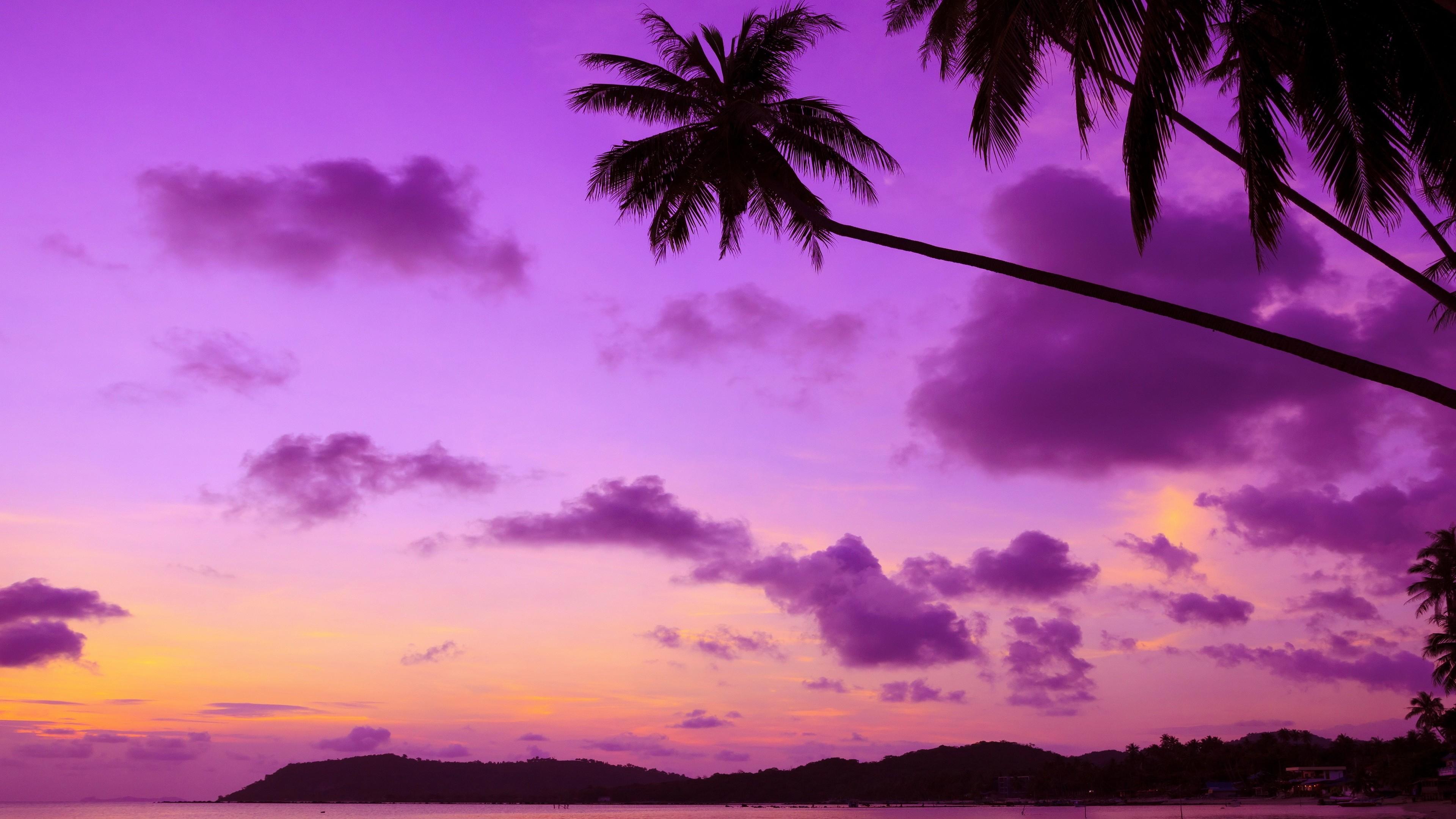purple palm tree 4k 1540131528 - Purple Palm Tree 4k - trees wallpapers, purple wallpapers, palm wallpapers, nature wallpapers, hd-wallpapers