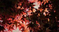 red autumn season leaves 4k 1540141090 200x110 - Red Autumn Season Leaves 4k - season wallpapers, red wallpapers, nature wallpapers, leaves wallpapers, hd-wallpapers, autumn wallpapers, 5k wallpapers, 4k-wallpapers