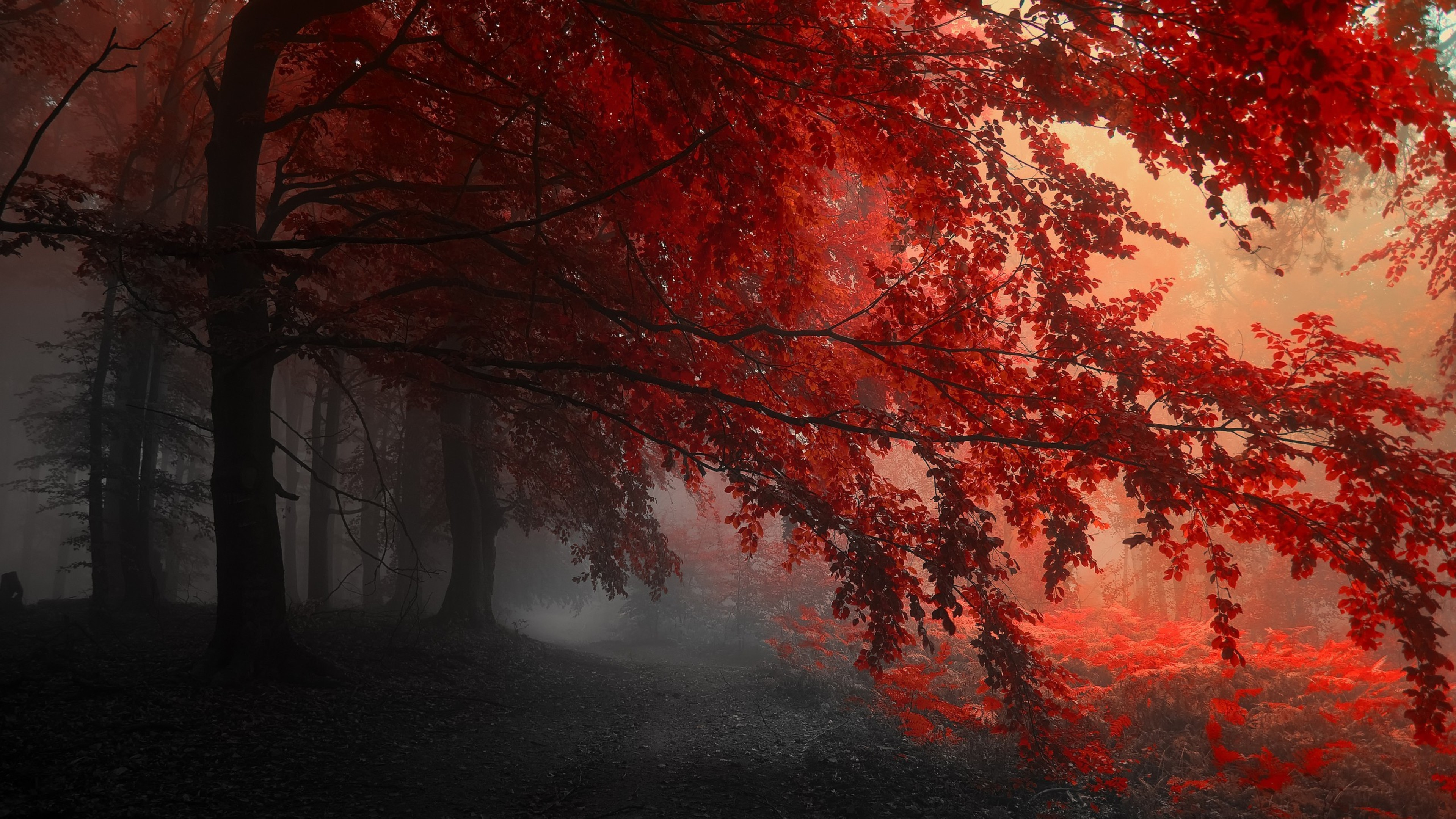 red forest trees path 4k 1540131549 - Red Forest Trees Path 4k - trees wallpapers, red wallpapers, path wallpapers, forest wallpapers