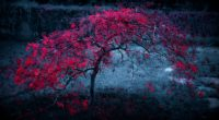 red leaves tree 4k 1540140127 200x110 - Red Leaves Tree 4k - tree wallpapers, nature wallpapers, leaves wallpapers, hd-wallpapers, 4k-wallpapers