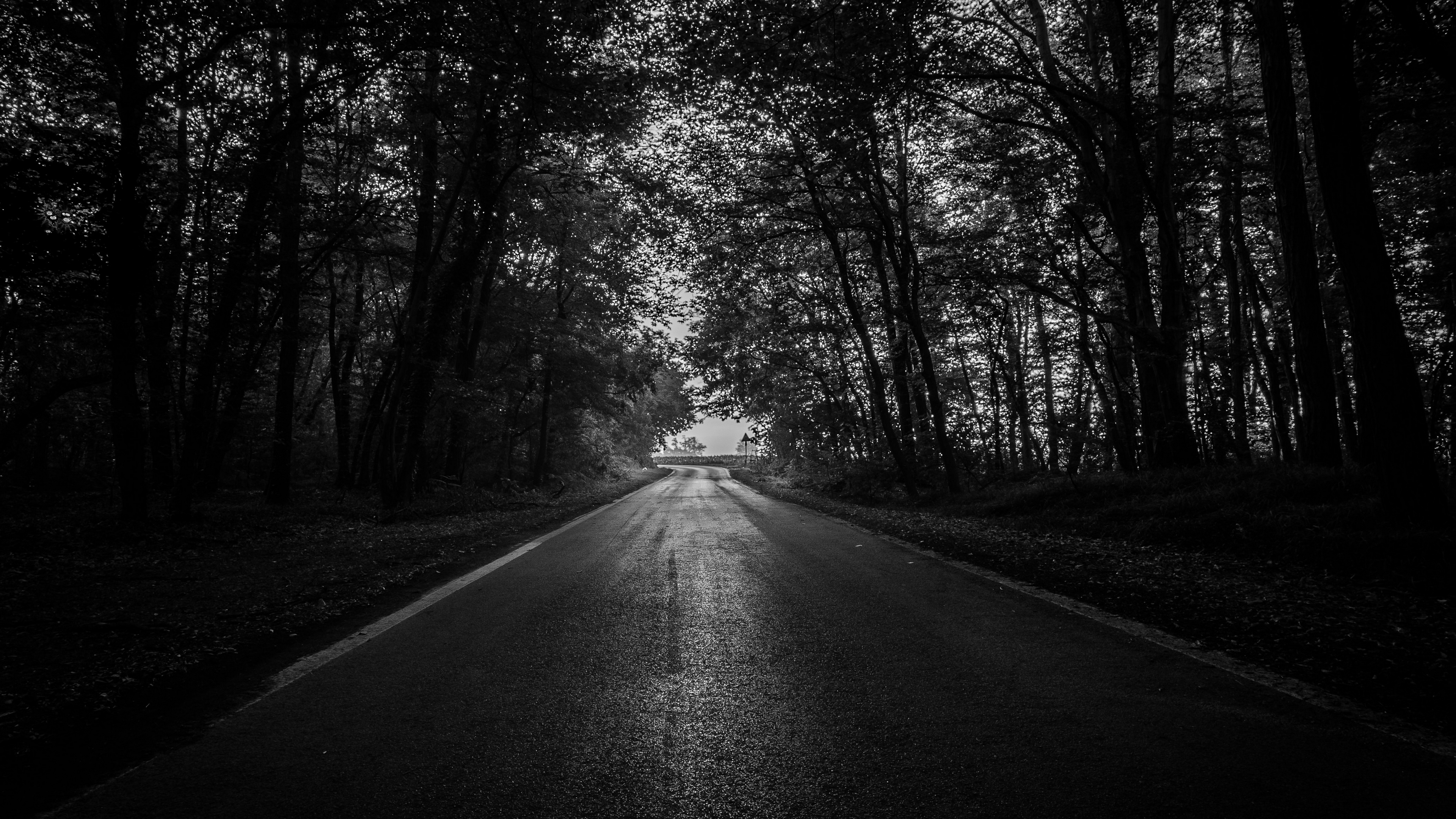 road trees bw dark forest 4k 1540575164 - road, trees, bw, dark, forest 4k - Trees, Road, bw