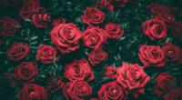 rose 5k 1540132883 200x110 - Rose 5k - rose wallpapers, nature wallpapers, hd-wallpapers, 5k wallpapers, 4k-wallpapers