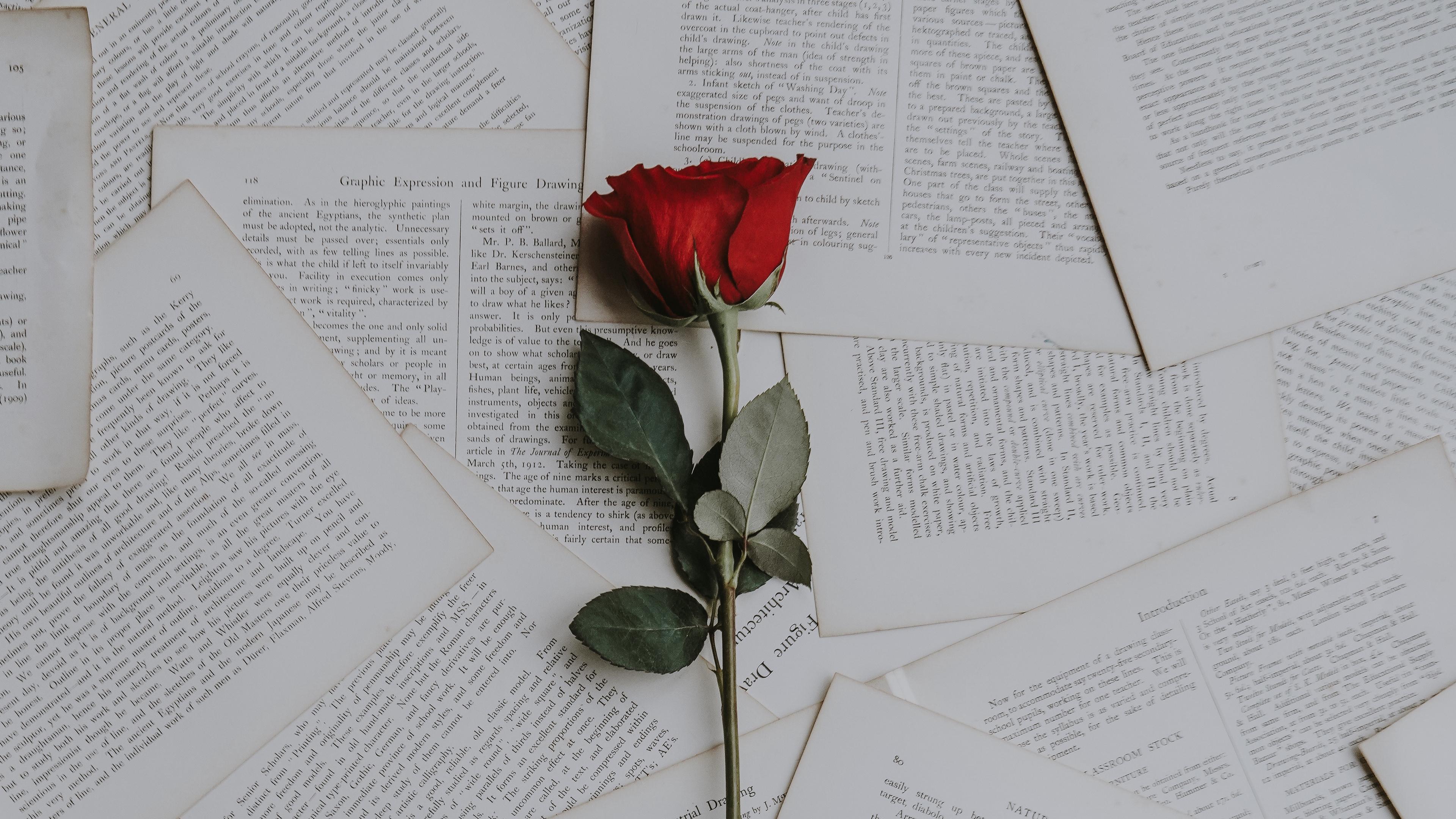 rose books texts 4k 1540064780 - rose, books, texts 4k - texts, Rose, books