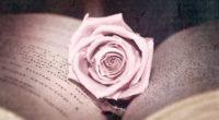 rose bud book close up 4k 1540064293 200x110 - rose, bud, book, close-up 4k - Rose, bud, Book