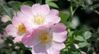 rose flower branch 4k 1540064727 200x110 - rose, flower, branch 4k - Rose, flower, branch