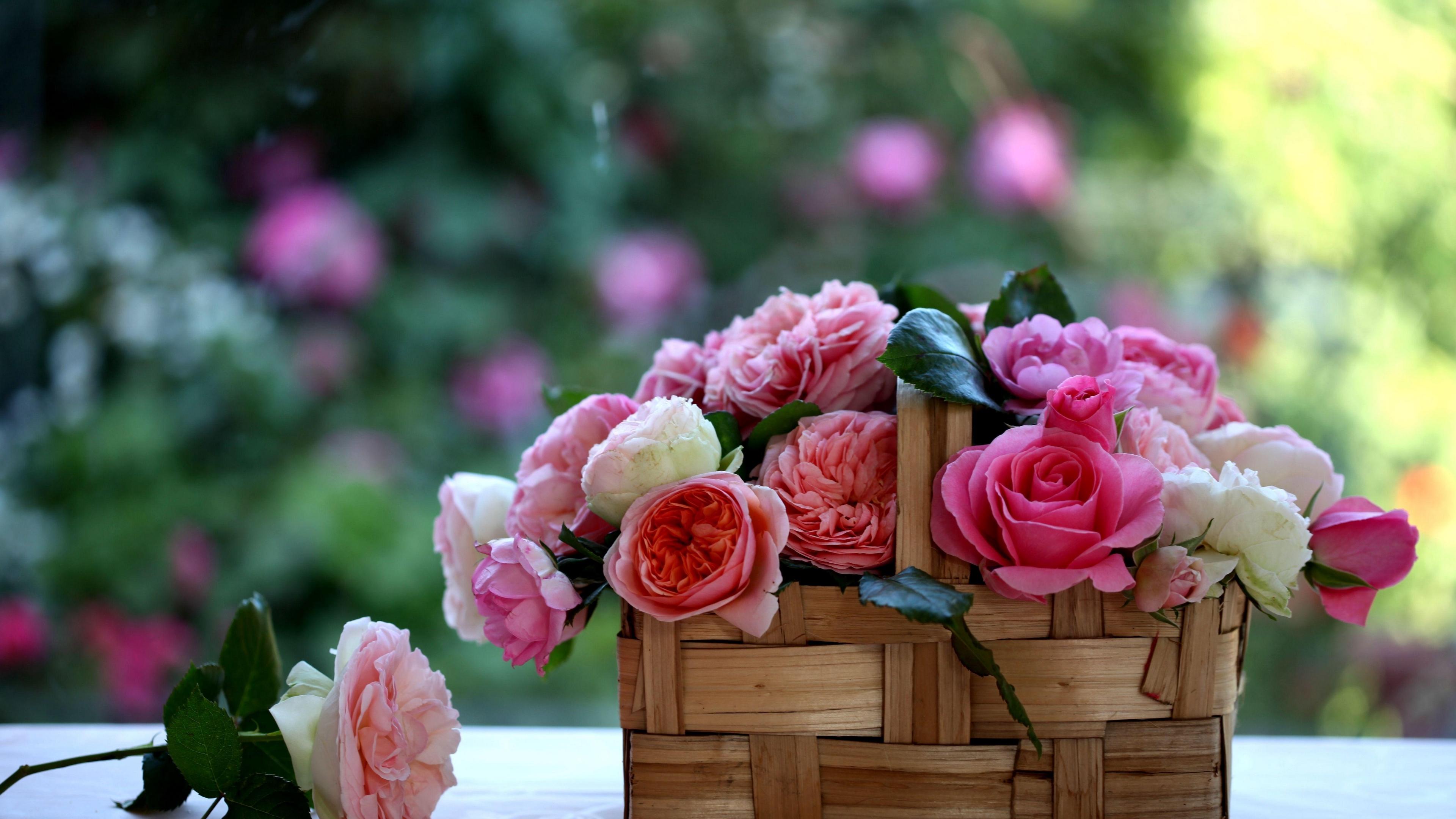 rose flowers buds basket blurring 4k 1540065054 - rose, flowers, buds, basket, blurring 4k - Rose, Flowers, Buds