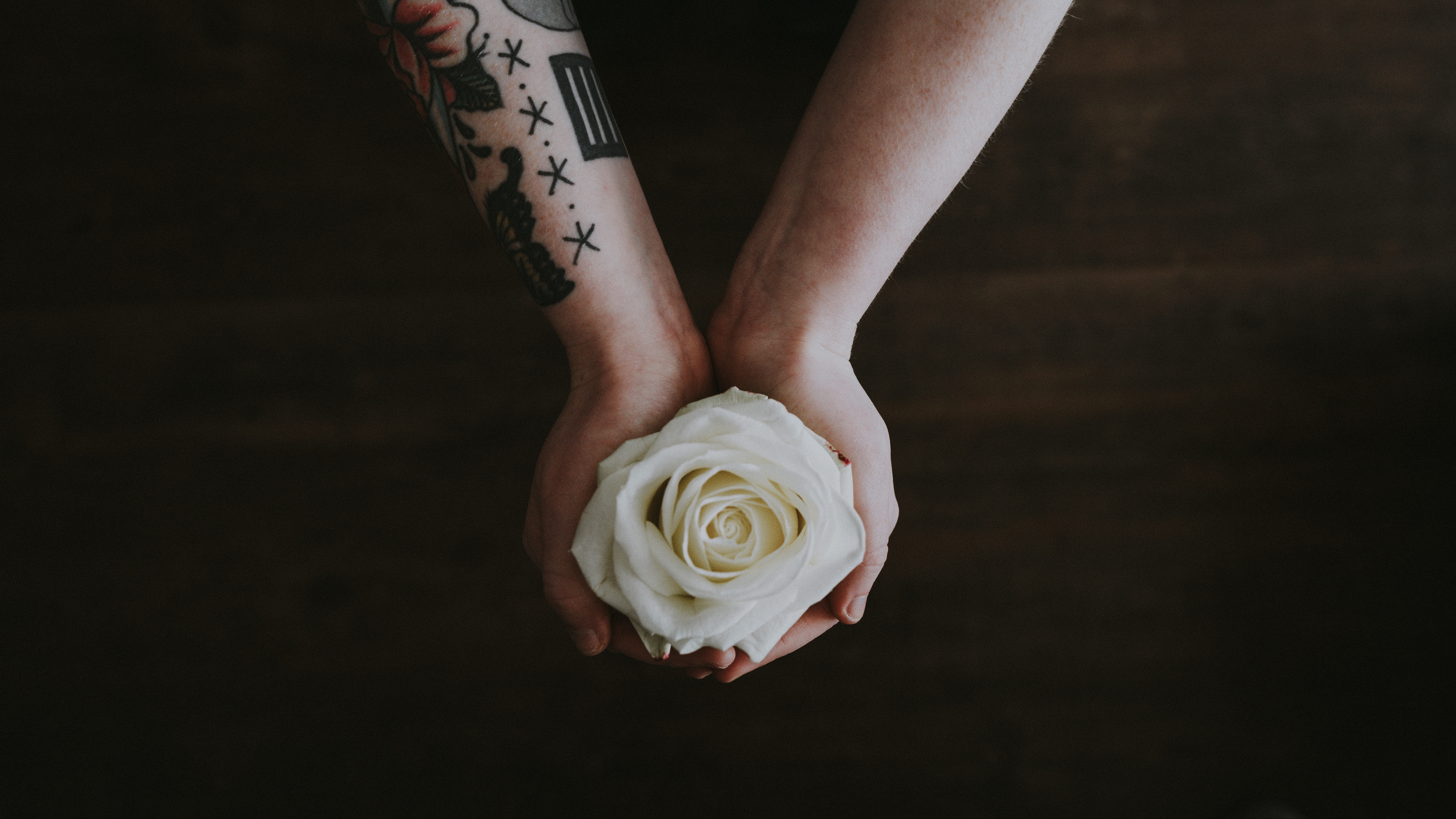 rose hands tattoo flower bud 4k 1540064114 - rose, hands, tattoo, flower, bud 4k - tattoo, Rose, Hands