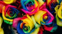 roses colorful rainbow 4k 1540064948 200x110 - roses, colorful, rainbow 4k - Roses, rainbow, Colorful