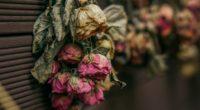 roses dry herbarium 4k 1540064155 200x110 - roses, dry, herbarium 4k - Roses, herbarium, dry