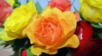 roses flower flowers 4k 1540064797 200x110 - roses, flower, flowers 4k - Roses, Flowers, flower