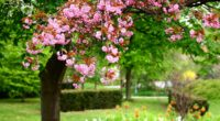 sakura bloom spring garden sharpness 4k 1540065057 200x110 - sakura, bloom, spring, garden, sharpness 4k - Spring, Sakura, Bloom