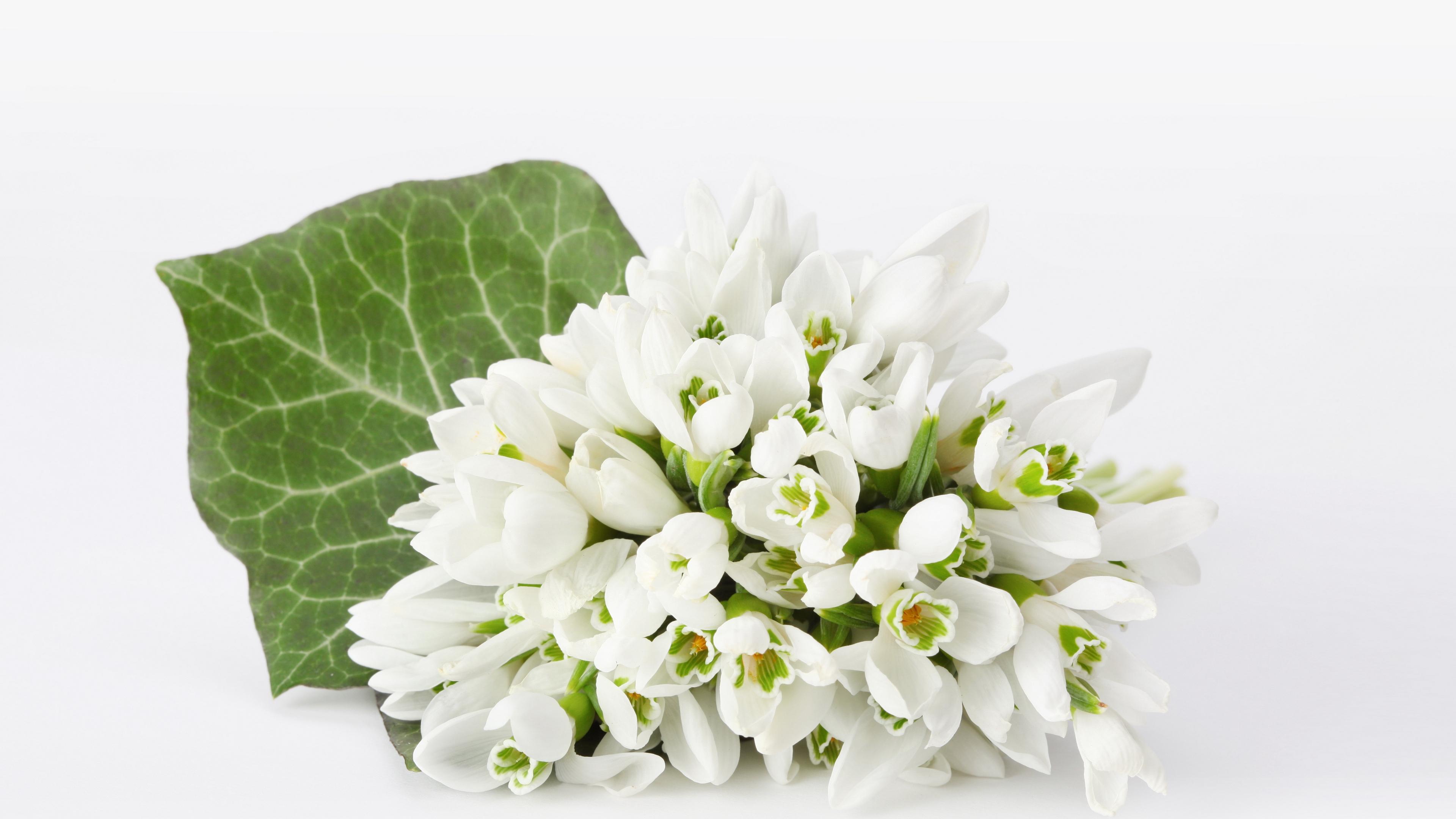 snowdrops bouquet white background 4k 1540065155 - snowdrops, bouquet, white background 4k - white background, snowdrops, Bouquet