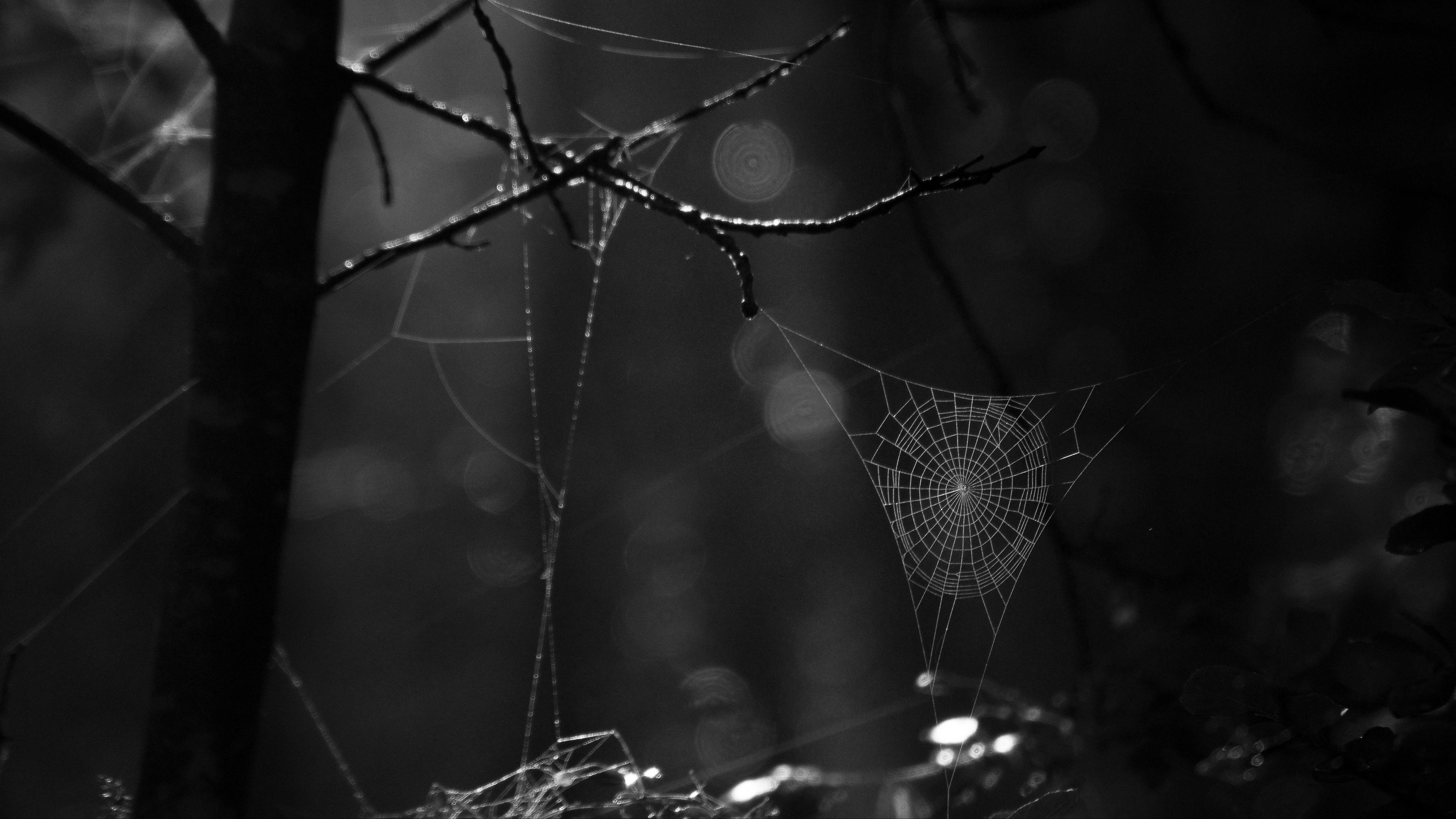 spiderweb bw dark wicker glare 4k 1540575162 - spiderweb, bw, dark, wicker, glare 4k - spiderweb, Dark, bw