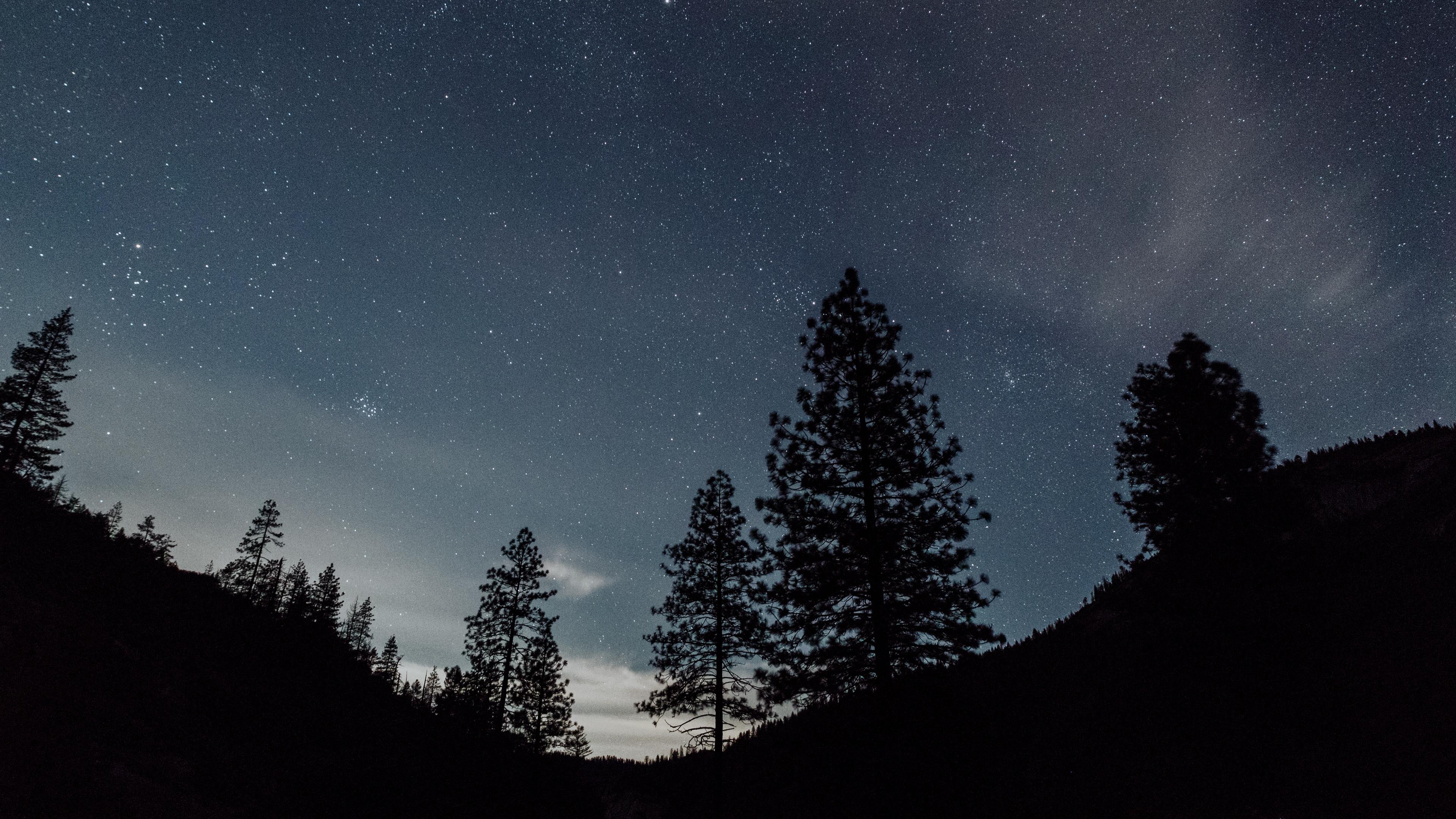 starry sky night trees landscape 4k 1540574908 - starry sky, night, trees, landscape 4k - Trees, starry sky, Night