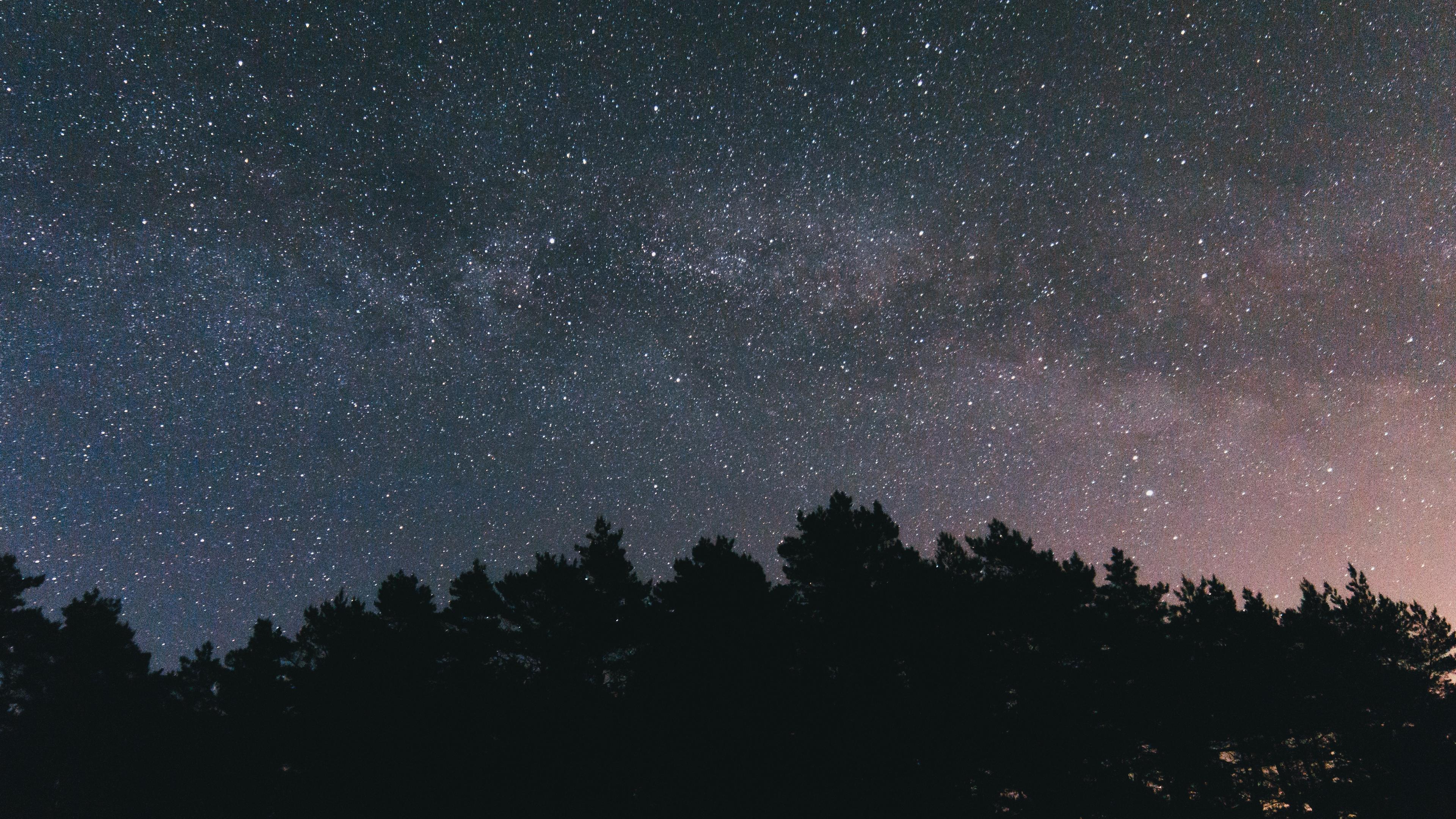 Wallpaper 4k Starry Sky Night Trees Sky 4k Night Starry