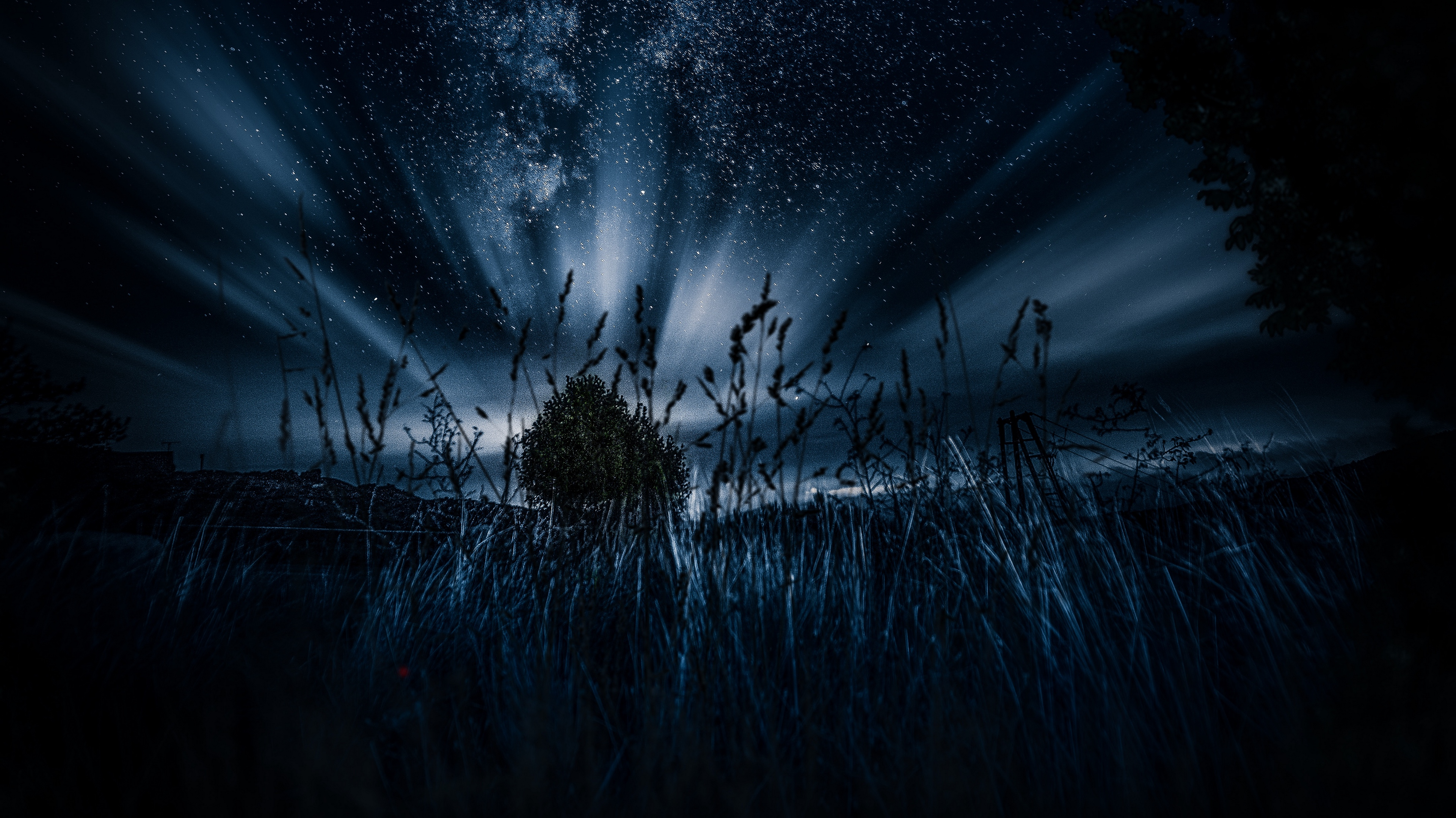 starry sky tree grass night 4k 1540575590 - starry sky, tree, grass, night 4k - tree, starry sky, Grass
