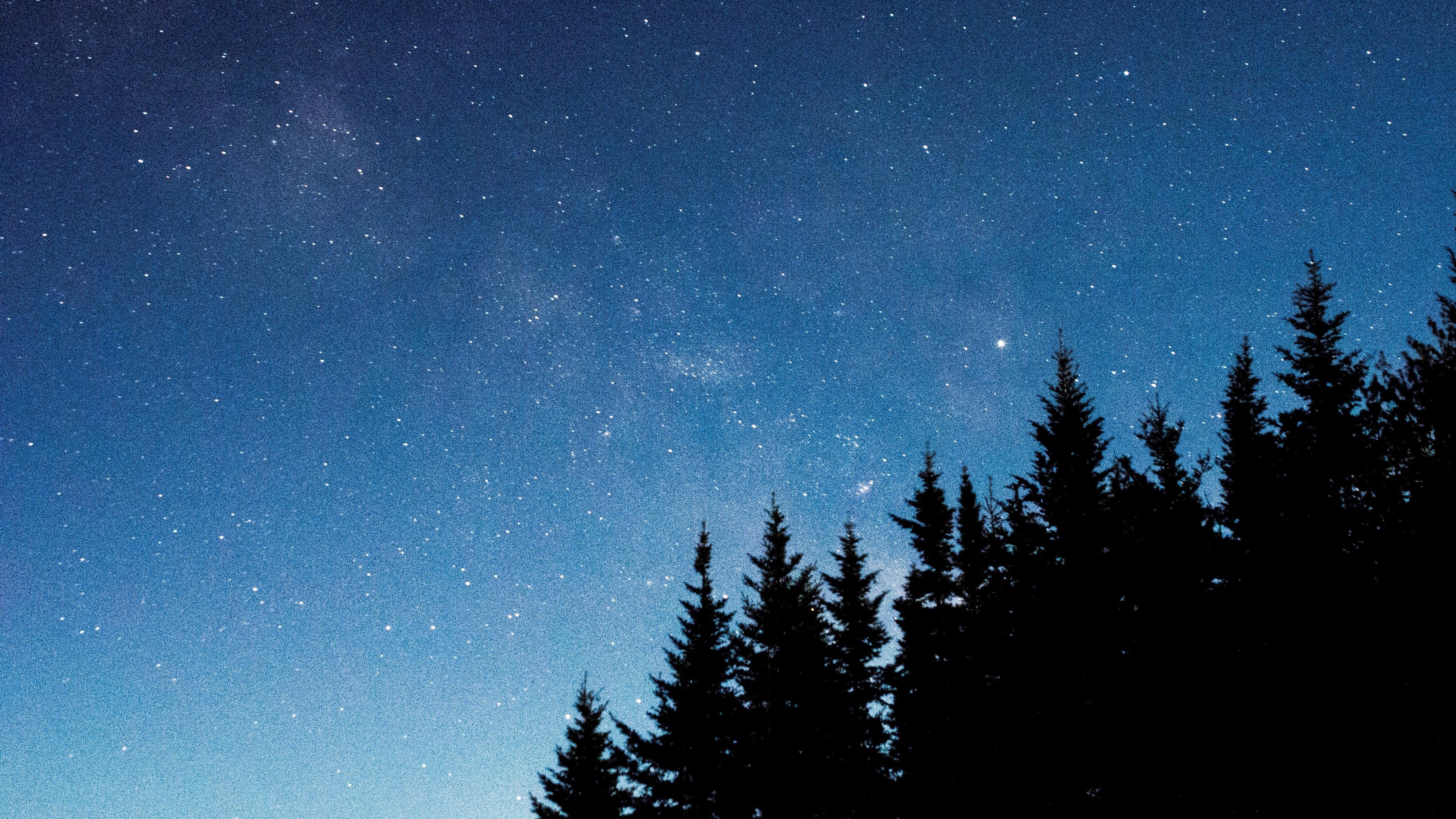 starry sky trees fir night 4k 1540575328 - starry sky, trees, fir, night 4k - Trees, starry sky, fir