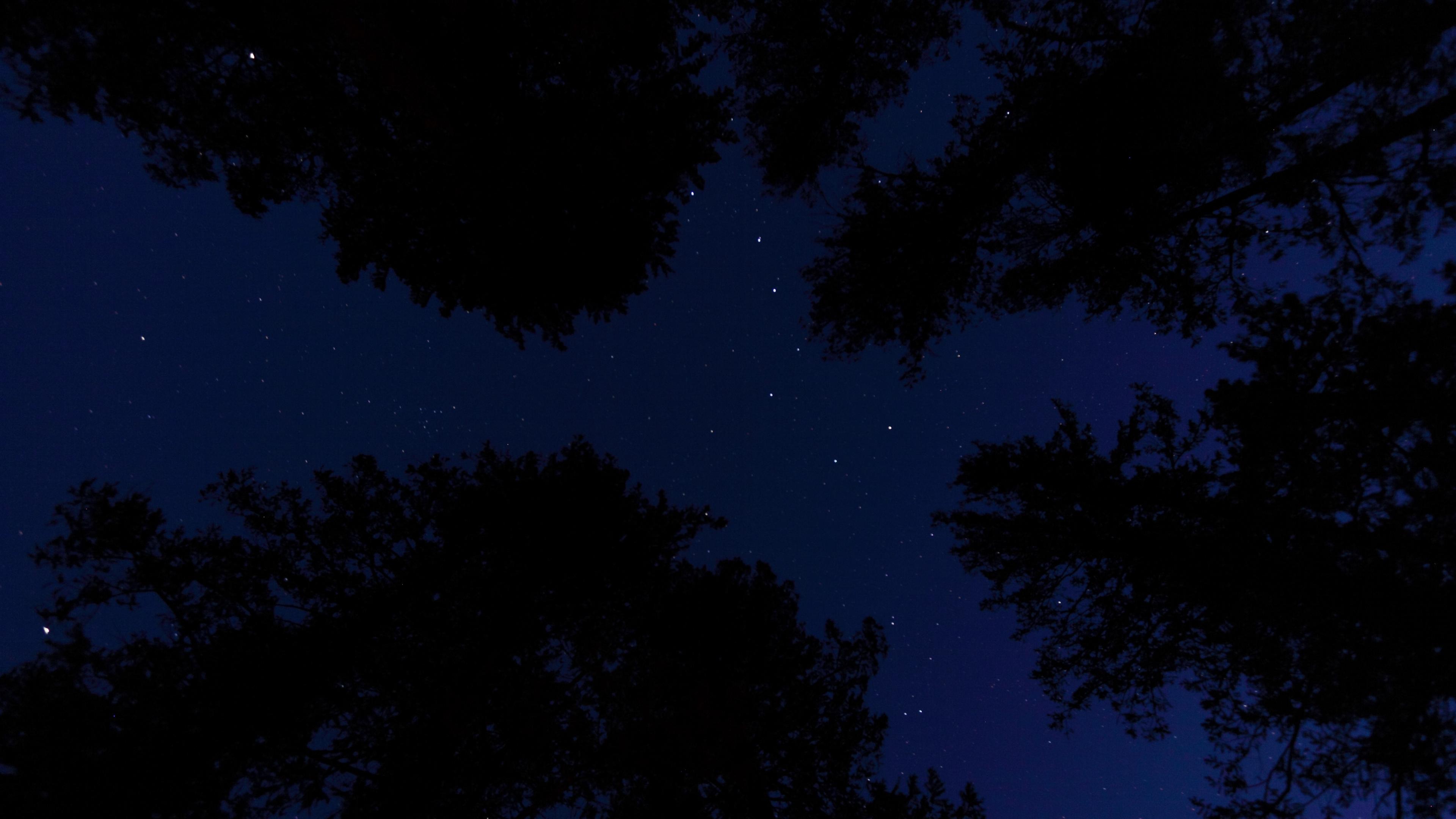 starry sky trees night bottom view 4k 1540576105 - starry sky, trees, night, bottom view 4k - Trees, starry sky, Night