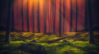 sunbeam forest 5k 1540132901 200x110 - Sunbeam Forest 5k - sunbeam wallpapers, nature wallpapers, hd-wallpapers, grass wallpapers, forest wallpapers, 5k wallpapers, 4k-wallpapers