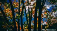 sunbeams between trees in autumn season daylight 4k 1540136249 200x110 - Sunbeams Between Trees In Autumn Season Daylight 4k - trees wallpapers, sunbeam wallpapers, nature wallpapers, hd-wallpapers, autumn wallpapers, 5k wallpapers, 4k-wallpapers
