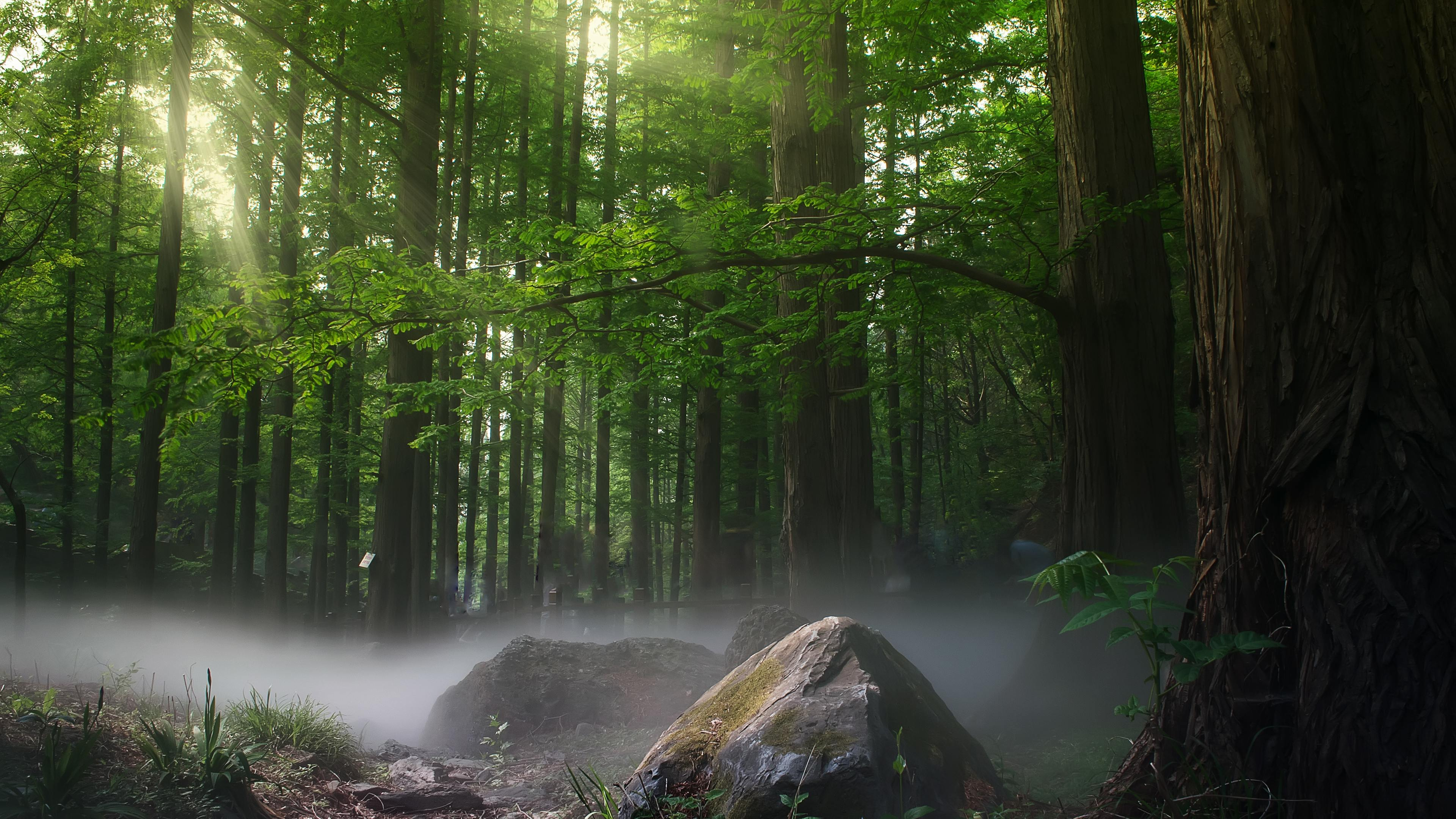 sunbeams forest daylight covered by trees 4k 1540140926 - Sunbeams Forest Daylight Covered By Trees 4k - trees wallpapers, sunbeam wallpapers, nature wallpapers, hd-wallpapers, forest wallpapers, 5k wallpapers, 4k-wallpapers