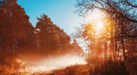 sunbeams opening forest day autumn season 4k 1540135364 200x110 - Sunbeams Opening Forest Day Autumn Season 4k - sunbeam wallpapers, nature wallpapers, hd-wallpapers, forest wallpapers, autumn wallpapers, 5k wallpapers, 4k-wallpapers