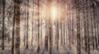 sunbeams snowy trees 4k 1540131851 200x110 - Sunbeams Snowy Trees 4k - trees wallpapers, sunbeam wallpapers, snow wallpapers, nature wallpapers