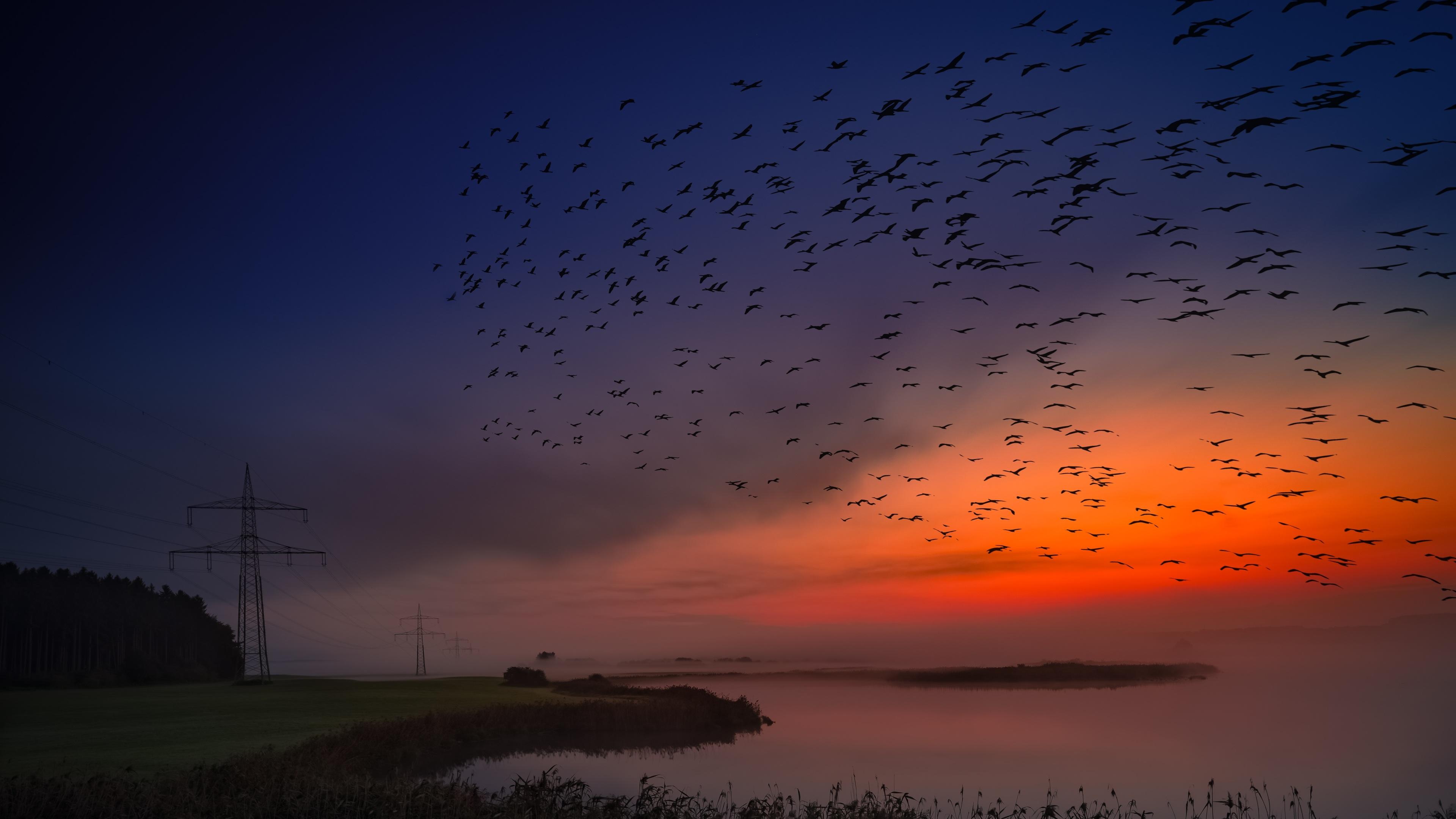 sunrise birds flight 4k 1540134131 - Sunrise Birds Flight 4k - sunrise wallpapers, nature wallpapers, hd-wallpapers, birds wallpapers, 5k wallpapers, 4k-wallpapers