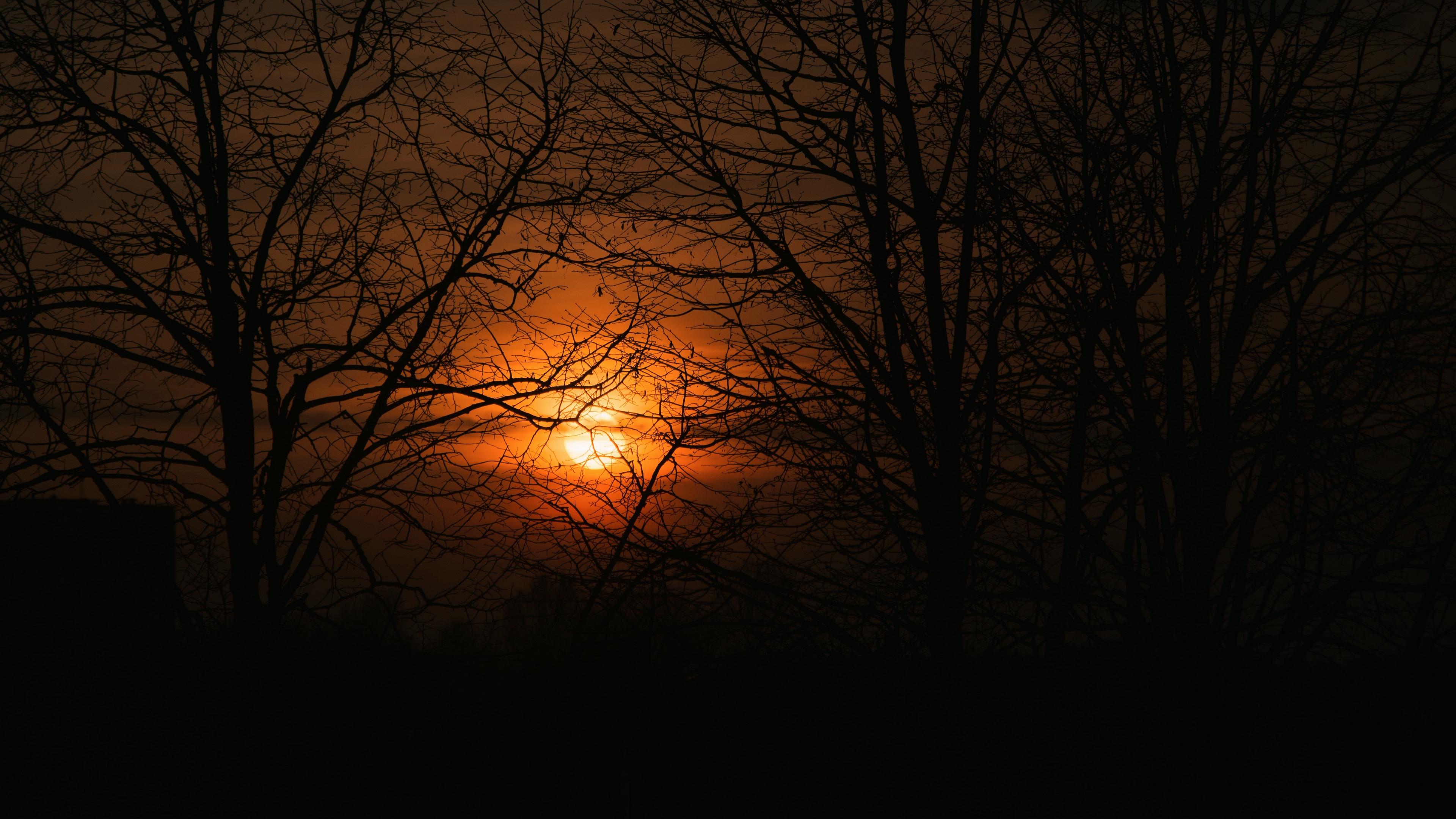 sunset sun branches trees sky 4k 1540575382 - sunset, sun, branches, trees, sky 4k - sunset, Sun, branches