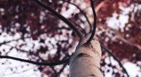 tree branches 4k 1540131946 200x110 - Tree Branches 4k - trees wallpapers, nature wallpapers