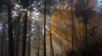tree nature wood sun fog leaf dawn light 4k 1540135433 200x110 - Tree Nature Wood Sun Fog Leaf Dawn Light 4k - trees wallpapers, sun wallpapers, nature wallpapers, light wallpapers, leaf wallpapers, hd-wallpapers, fog wallpapers, 4k-wallpapers