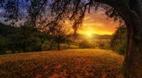 tree sun aesthetic dawn landscape panorama 4k 1540136337 200x110 - Tree Sun Aesthetic Dawn Landscape Panorama 4k - tree wallpapers, nature wallpapers, landscape wallpapers, hd-wallpapers, dusk wallpapers, dawn wallpapers, 5k wallpapers, 4k-wallpapers