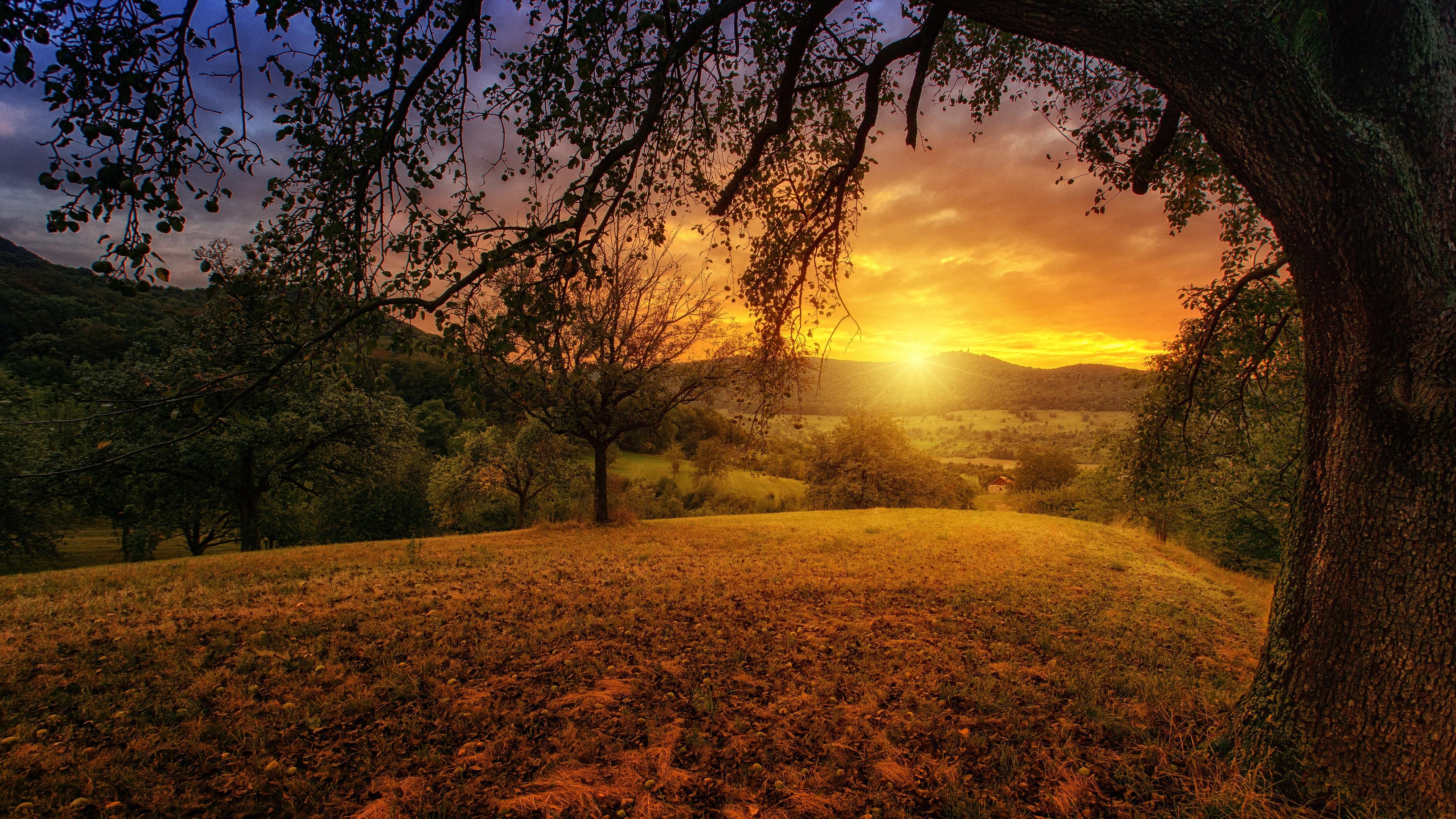 tree sun aesthetic dawn landscape panorama 4k 1540136337 - Tree Sun Aesthetic Dawn Landscape Panorama 4k - tree wallpapers, nature wallpapers, landscape wallpapers, hd-wallpapers, dusk wallpapers, dawn wallpapers, 5k wallpapers, 4k-wallpapers