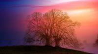 tree sunset dawn 5k 1540142958 200x110 - Tree Sunset Dawn 5k - tree wallpapers, sunset wallpapers, hd-wallpapers, dawn wallpapers, 5k wallpapers, 4k-wallpapers
