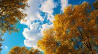 trees autumn clouds 4k 1540131087 200x110 - Trees Autumn Clouds 4k - trees wallpapers, nature wallpapers, clouds wallpapers, autumn wallpapers