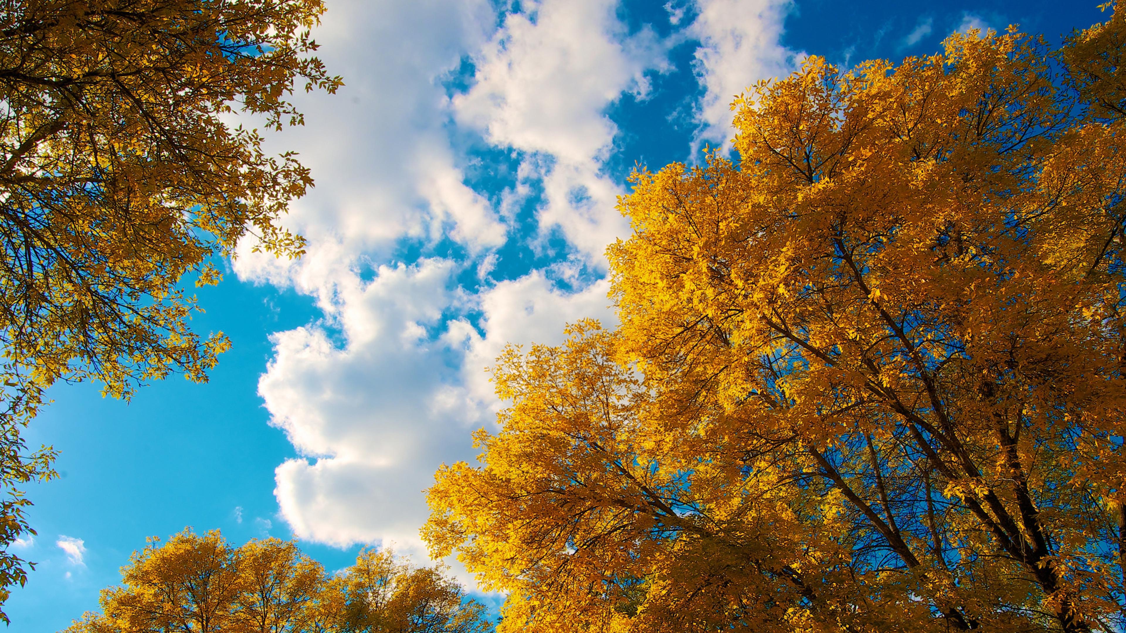trees autumn clouds 4k 1540131087 - Trees Autumn Clouds 4k - trees wallpapers, nature wallpapers, clouds wallpapers, autumn wallpapers